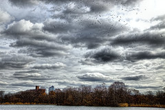 Seagulls circling at high altitudes