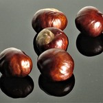 Stark, Raving Conkers! by Sue Ould