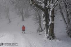 PIAN DELLE MACINARE, mentre imbianca (Parco naturale monte Cucco)