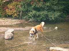 Ein Plitschi Platschi Hund | 2. September 2016 | Schleswig-Holstein - Deutschland