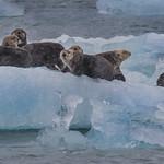 Sea Otter Snow Storm by Richard White