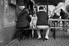 Chien sur un banc, Grand'Rue, Strasbourg