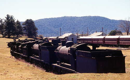 Dorrigo Steam