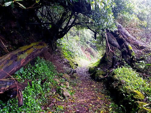 PRC40 - Faial do Terra Hike | San Miguel - Azores