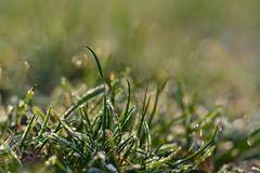 Frozen Green