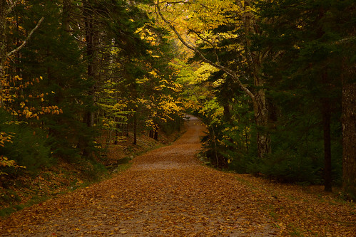 I'll Walk Down the Lane