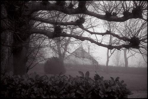 Un jardin dans la brume