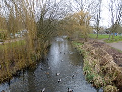 GOC Welwyn Garden City 031: River Lea, Stanborough Park