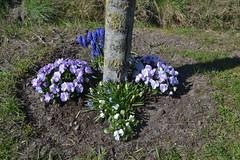 Bloemen naast een boom (136FJAKA_3372)