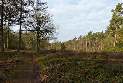 Heathland in nature area Mentink near Winterswijk - Achterhoek