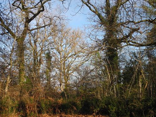 Ma forêt mystique / Mein mystischer Wald / Мой мистический лес