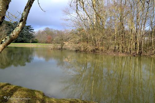 Pâles reflets dans les étangs