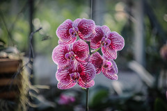 2020-01-29 - Orchideeënhoeve Luttelgeest