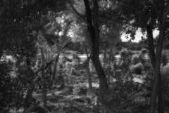 Rio Grande Bosque