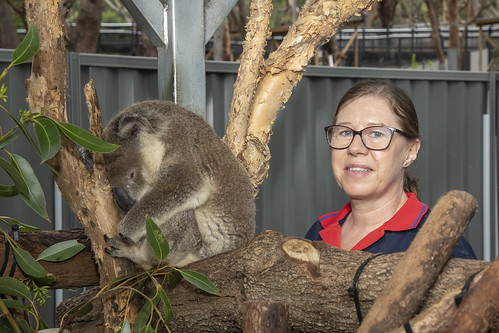 Port Stephens Koalas