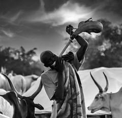 Cow Horn Trumpet
