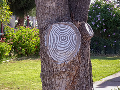 Clever Tree