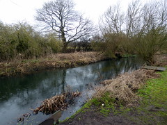 GOC Welwyn Garden City 049: River Lea, Stanborough Park