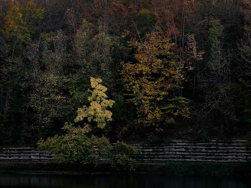 Autumn scene.