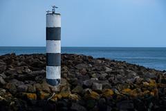 Sea Gull Watch