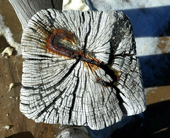Holz-Struktur Wood-Structure