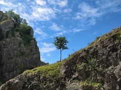 Pleasing shapes, Cheddar Gorge