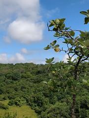 Cheddar Gorge trees