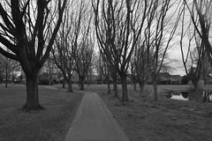 Weg en bomen in Dante in zwart en wit (136FJAKA_3391)