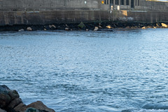 DUN LAOGHAIRE WATERFRONT [ALONG QUEEN'S ROAD]-159898