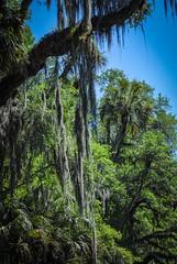 Florida Jungle at Dead River (explored 2-7-20)