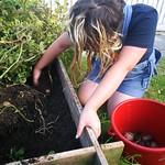 Harvesting the whataroa