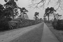 Oude Raalterweg in zwart en wit (136FJAKA_3398)