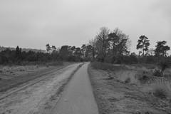 Oude Raalterweg in zwart en wit (136FJAKA_3396)