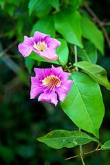 Argentina-01388 - Trail Flower