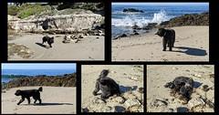 Benni at the Beach