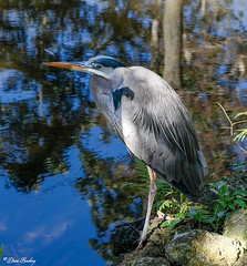 Homosassa Springs State Wildlife Park  2020