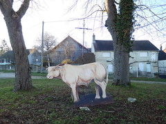 A cow in a town