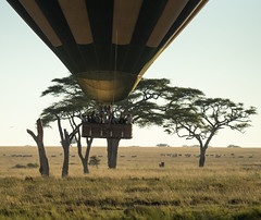 Hot air balloon, Serengeti.