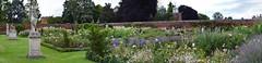 hampton court rose garden2