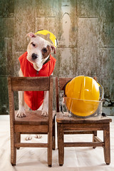 Mixed Breed Dog Wearing a Safety Vest next to a firemans helmet