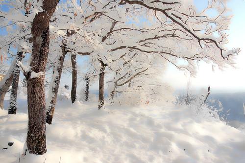 Snow dream ©twe2012☼
