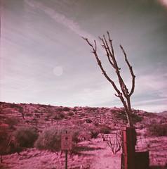 Big Morongo Canyon (0001)