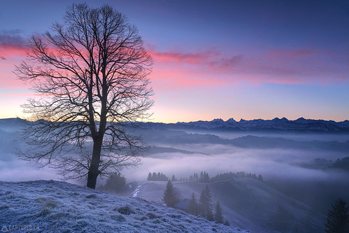 Dawn and the tree - Lüderenalp