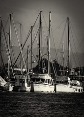 Sail Boats of Moss Landing Harbor