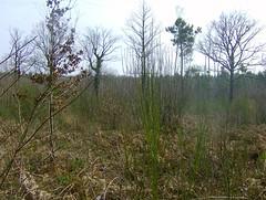200802_0036