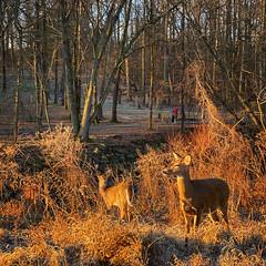 Just another Sunday morning in Bluemont Park, Arlington VA Feb. 9, 2020