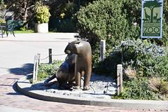 San Francisco Zoo February 8, 2020
