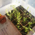 Seedlings with water pump
