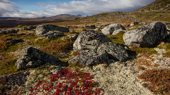 Dovre and Rondane in Norway