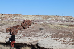 Giant Logs Trail and Badlands in the background